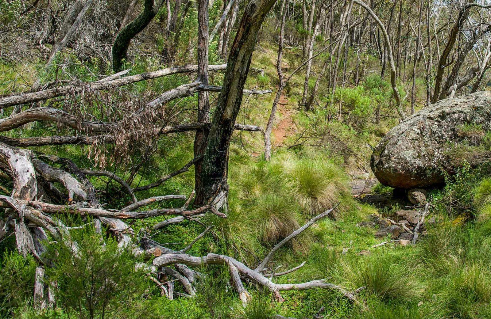 Hopetoun Falls walking track, Mount Canobolas State Conservation Area. Photo: Steve Woodhall