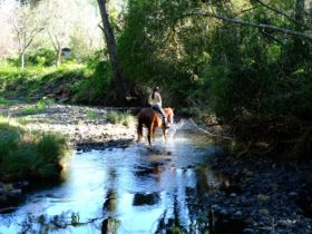 Trail rides available for small groups up to five people.