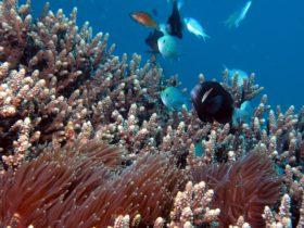 Scuba Diving Lord Howe Island