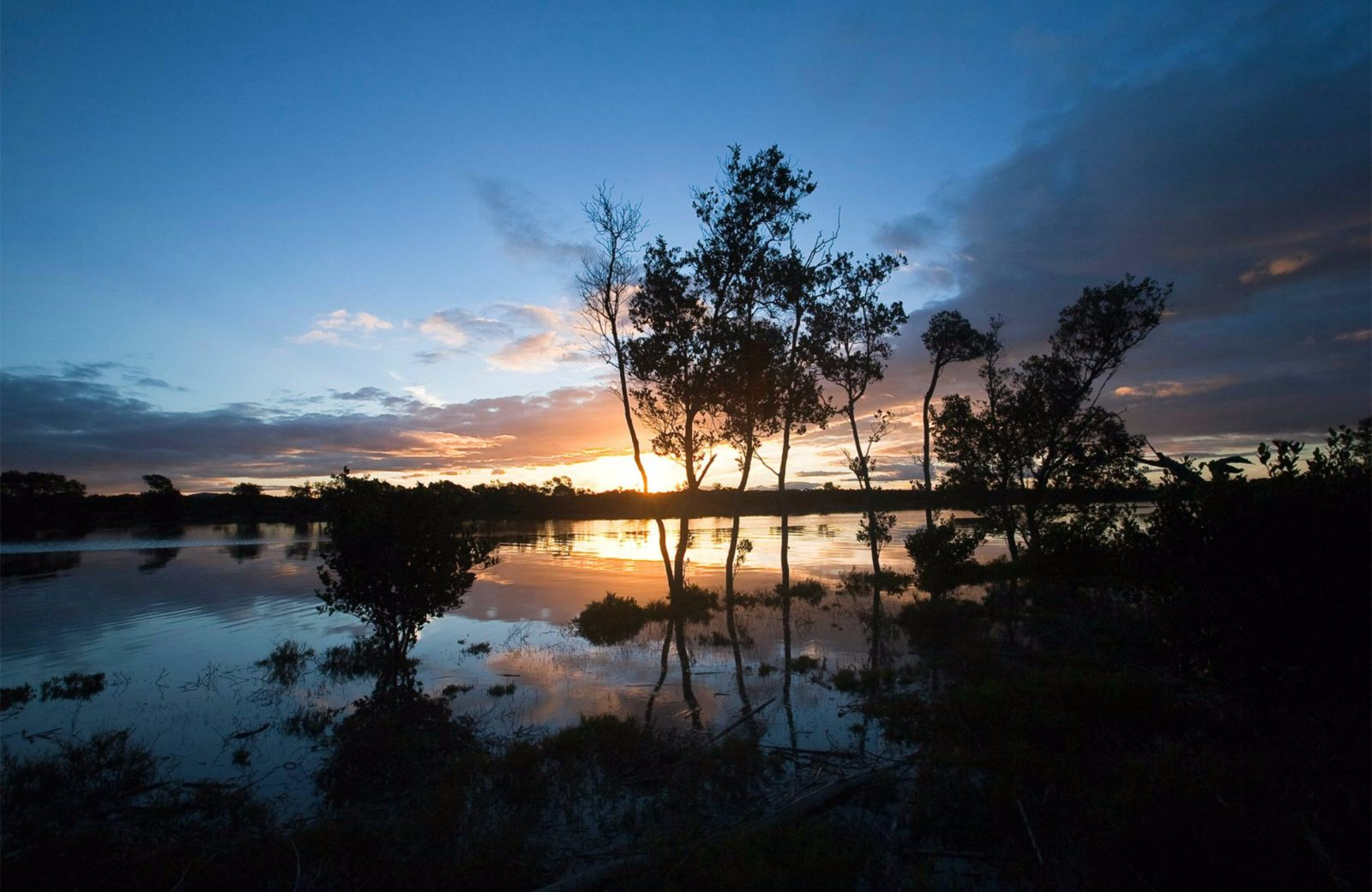 Hunter Wetlands National Park. Photo: Susan Davis/NSW Government