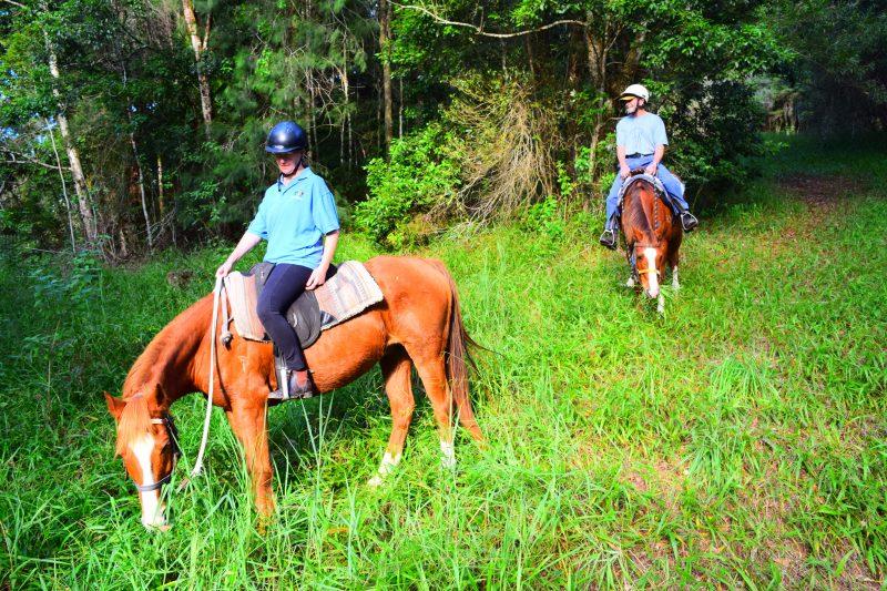 HWH Stables Rainforest Ride