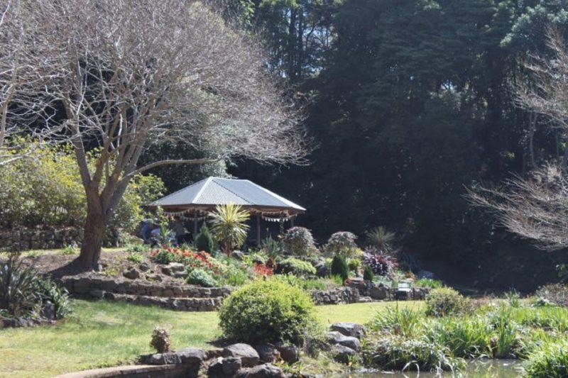 Illawarra Rhododendron Gardens