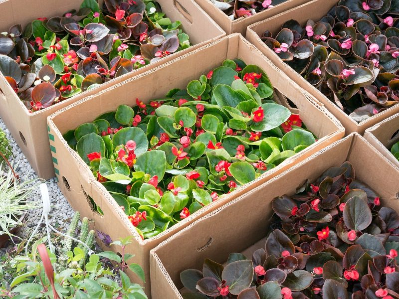 Iluka market plants