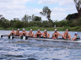 Rowers on the Clarence River
