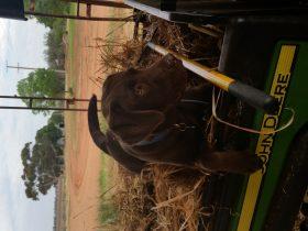 Rosie in the Gattor