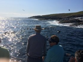 checking out the local playful fur seals from the boat