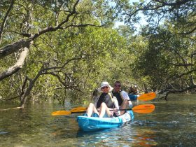 Huskisson Kayak Tour