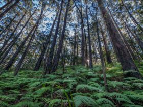 Jilliby State Conservation Area