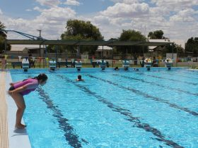 Hay Free Olympic Pool