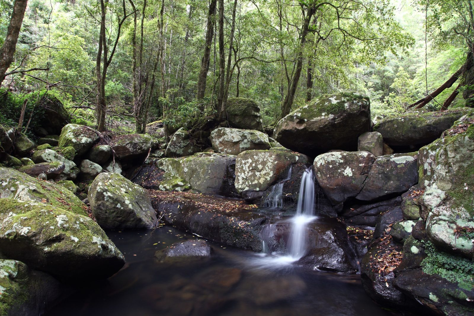 Water rushing over mossy rocks at Kangaroo River with bushland in the background