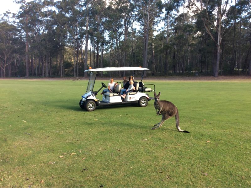 "Our cart can get you right up close to the kangaroos and ""YES - you can get out to take photographs"""