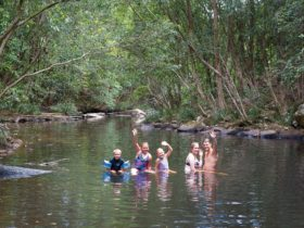 Swimmers in Upsalls Creek, Swans Corssing in Kerewong State Forest