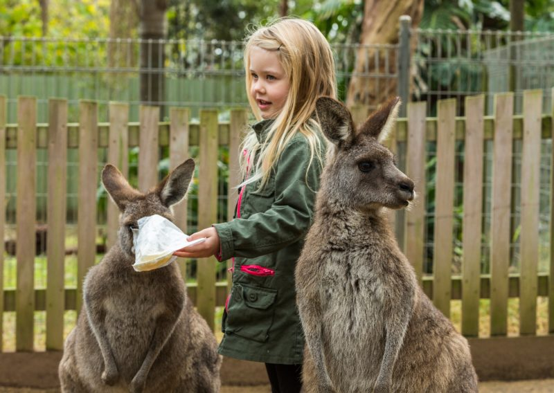 Our friendly Kangaroos are waiting for you to visit and pat them