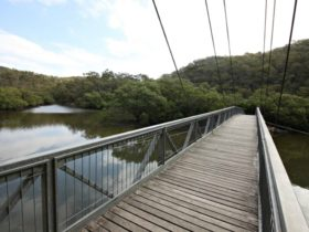 Gibberagong Mangrove boardwalk. Photo: Andy Richards