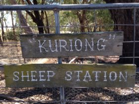 Kuriong Sheep Station