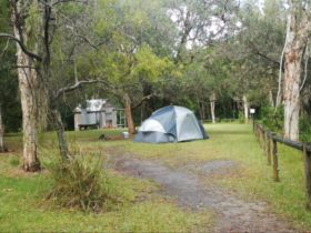 Kylies Hut Walk-in campground, Crowdy Bay National Park. Photo: Debby McGerty