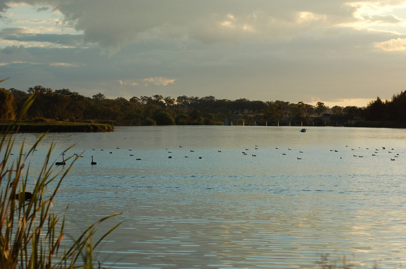 Lake Inverell Reserve | Attraction Tour | Inverell | New South Wales -  Australia's Guide