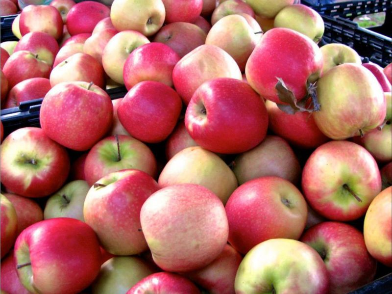 Apples direct from the farmer
