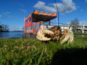 Murray Crayfish at Lake Mulwala