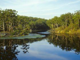 Lake Parramatta Reserve at sunset