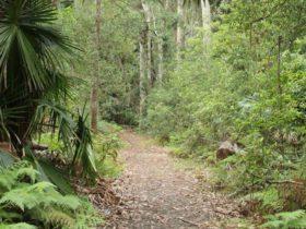 Lake walking track