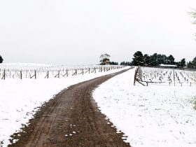 Lark Hill Vineyard in Snow