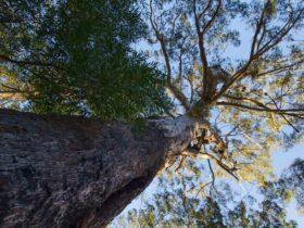 Laurieton track, Dooragan National Park. Photo: John Spencer/NSW Government