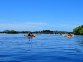 Tour group paddling on the Myall River with Lazy Paddles