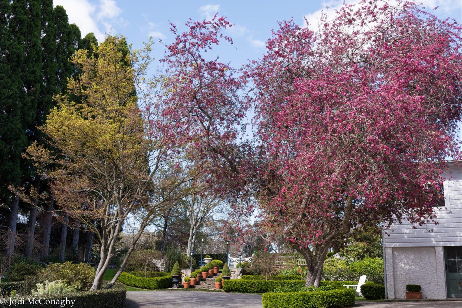 Garden - Blue Vista