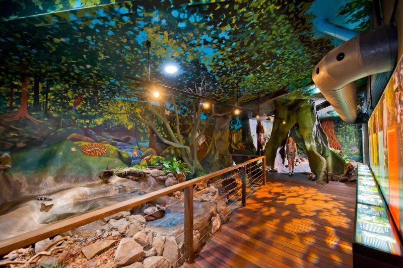 Lismore Visitor Information Centre's Indoor Rainforest Walk