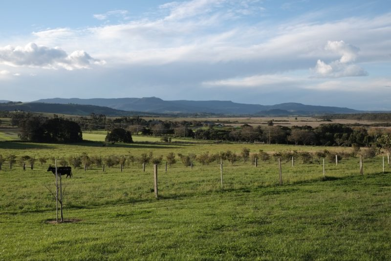 Mountain Ridge Wines, live music and lunch in idyllic country setting