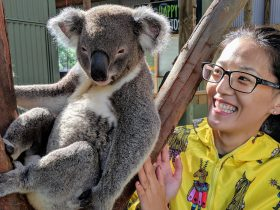 Private koala experience, Wildlife, Waterfalls & Wine full day tour from Sydney