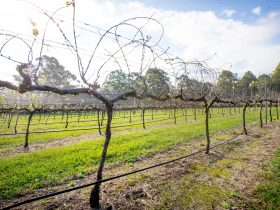 Vines growing in the sunshine