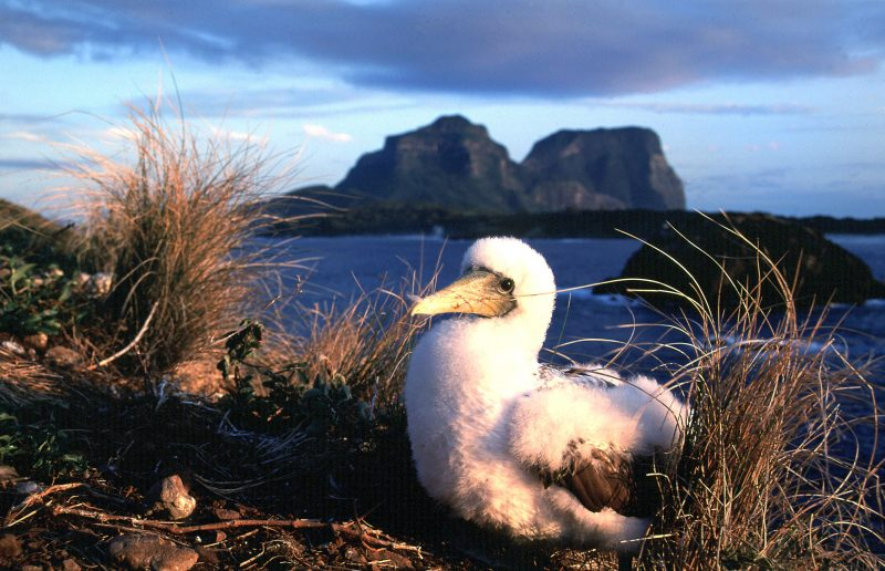 Birdwatching Lord Howe Island