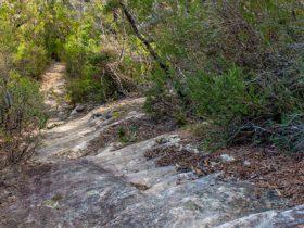 Lovers walking track, Morton National Park. Photo: Michael Van Ewijk