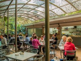 Lyrebird Cafe, Budderoo National Park