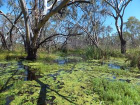 Macquarie Valley Trails