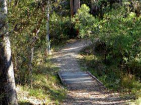 McDirtys walk, Oxley Wild Rivers National Park. Photo: J Lehmann