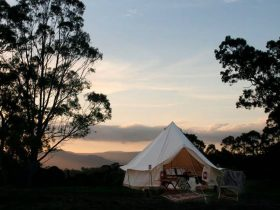 Glamping in the Blue Mountains