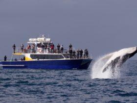 Merimbula Marina - Ocean Adventure Tours