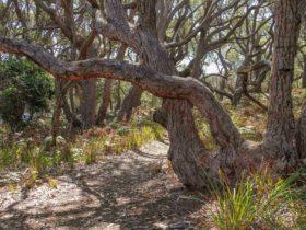 Middle Lagoon walking track, Mimosa Rocks National Park. Photo: John Yurasek