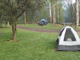 Tent in Mill Creek campground, Dharug National Park. Photo: John Yurasek