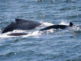 Minnamurra Whale Watching Platform