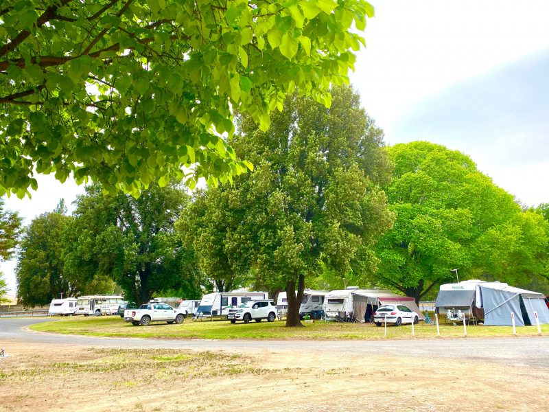 Powered sites Molong Caravan Park