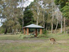 Morisset picnic area