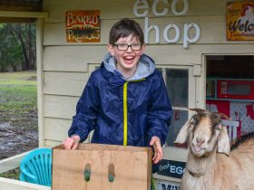 farm stay meet animals goats and farm activities