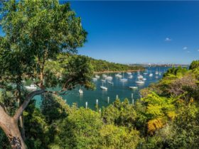 Boats docked in Little Sirius Cove, Mosman
