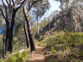 Mount Coryah walking track, Mount Kaputar National Park. Photo: Ian Smith