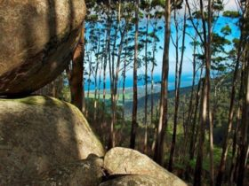 View of the ocean from Gulaga (Mount Dromedary)