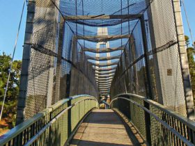 A footbridge on the Mount Ku-ring-gai track to Berowra. Photo:Andy Richards/NSW Government